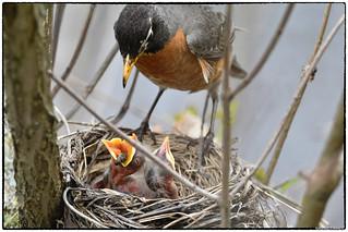 Feeding series (9/9 images)