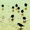 """Tutti sistemati"" (ix 2017) Tags: mar sea ocean beach playa aves cuadrada cuadrado square guerrero méxico mexico"
