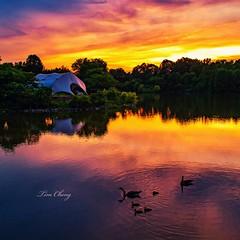 Sunset Lake (still_shotz) Tags: reflection geese birds maryland lake sunset