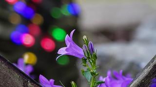 Flora - 5337