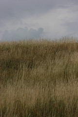 Sombre (Stefan Ursachi) Tags: mottled sombre dry grass land abstract magic grey nature natural composition inspiring moment rural view eastern europe romania romanian amateur amateurish canon 550d t2i rebel dslr photography cloudy sky field tamron 80210 eerie
