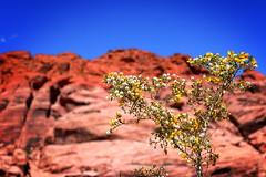 Canyon Scrub (*DZ.) Tags: canyon blue red green shrub scrub bush desert rock