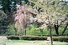 A gradation (しまむー) Tags: minolta himatic e rokkor 40mm f17 fuji pro400h 400 hirosaki sakura 弘前 桜