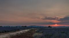 Plateau de Valensole (pascal548) Tags: lavande montventoux nuit plateaudevalensole ciel valensole alpesdehauteprovence