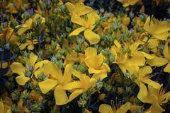 Flowers ... (Julie Greg) Tags: flowers nature park garden colours fujifilm flower england kent macro details