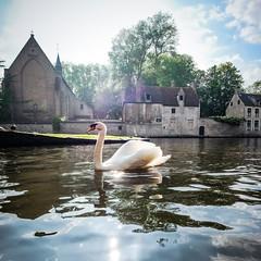Swan Squared (Drummerdelight) Tags: belgium begijnhof swan pov