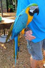 Key West (Florida) Trip 2017 7705Ri 4x6 (edgarandron - Busy!) Tags: florida keys floridakeys keywest bird birds nancyforresterssecretgarden