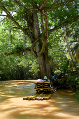 Parking (Anthony Mark Images) Tags: jamaica westindies caribbean foliage trees vines water river thegreatriver raft bambooraft rafting raftingtour couple captain romantic relaxing peaceful tranquil manandwoman shadows sundaylights