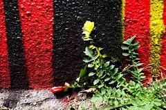 """""""Ƨtreet∀rtVictim (Petra U.) Tags: weed dandelion colors streetart painting graffiti lisbon lisboa lissabon"""