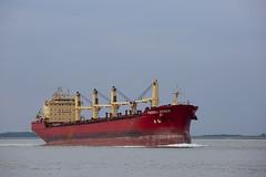 FEDERAL WESER (angelo vlassenrood) Tags: ship vessel nederland netherlands photo shoot shot photoshot picture westerschelde boot schip canon angelo walsoorden cargo federalweser bulker