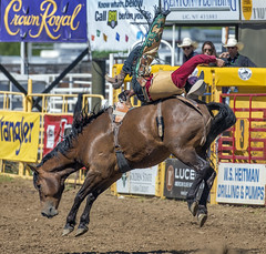 The Rider (acase1968) Tags: rodeo red bluff roundup nikon round up horse cowboy rider nikkor d750 200500mm