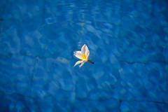 Flower in pool water