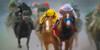 Triple Crown Winner (boriches) Tags: race horses