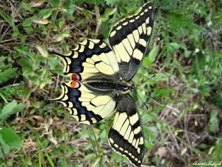 Butterfly 1684