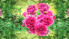 * Splende il sole * Sunshine * (argia world 1) Tags: argiagranuzzo fiori flowers rose roses roseto rosegarden giardino garden rami branches foglie leaves rosethorns spine