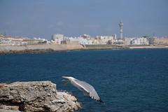 DSC01233 (joelle.d) Tags: cadix andalousie espagne cadiz andalucia spain