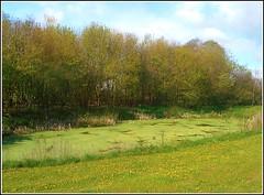 Roadside Pond .. (** Janets Photos **) Tags: uk nature ponds greenery trees algae eastyorkshire