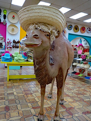 Camel Statue. (dccradio) Tags: hamer dillon sc southcarolina dilloncounty southoftheborder touristattraction indoors inside store hatstore hatsoftheworldstore retail shopping camel sombrero strawhat hat wig statue camelstatue hats wall floor lights displays canon powershot elph 520hs