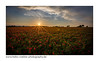 Abendrot /sunset red (H. Roebke) Tags: canon5dmkiv landscape sunset sonne sonnenuntergang germany rural canon1635mmf28lisii red kronsberg 2017 mohn hannover color sun nature sommer lightroom poppies