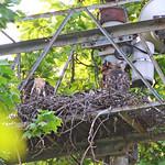 GT Hawk Nest - 0357 thumbnail