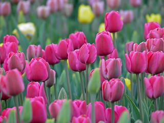 Spring soft
