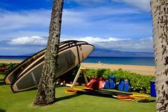 Hawaii pastoral (stephencharlesjames) Tags: hawaii maui beach surf boards south pacific ocean palm trees