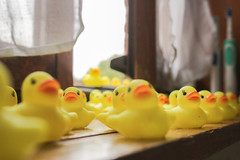 The Quackening - Ride of the Rubber Ducks (benjamin.t.kemp) Tags: yellow rubber ducks rubberducks colorsinourworld