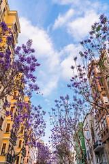 Jacarandas entre edificios / Jacarandas between buildings (CrisGlezForte) Tags: jacaranda almeria árboles flores violetas edicios cielo pájaros tree buildings sky birds