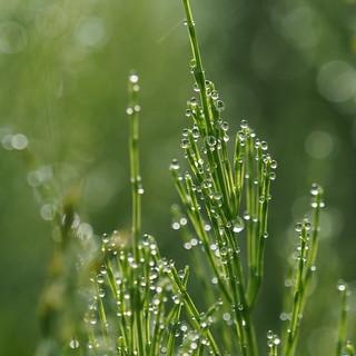 Morgenimpressie in het groen