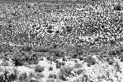 Desert Flora (*DZ.) Tags: desert cactus plant sand stones rock canyon nature flora