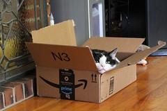 Prime Spot For a Nap (Piedmont Fossil) Tags: wrangler box cat explored