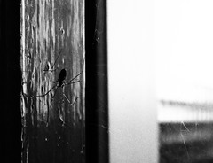 (saraconve) Tags: spider black white blackandwhite biancoenero bianco nero bnw bn bw grain grainy disturbo noise noisy rumore ragno animal animals nikon nikoncoolpix nikoncoolpixp600 nikonp600 coolpixp600 coolpix p600 photography fotografia fotografiadigitale digitalphotography digital digitale