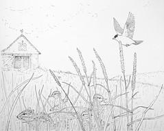 GoldfinchDrawingImproved (Alex Hiam) Tags: meadow barn spring goldfinch chipmunk ducklings grass pen ink hay