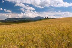 Golden fields (methariorn78) Tags: landscape paesaggio sky clouds cielo nuvole colors colori yellow giallo blue blu green verde nature natura farmhouse casolare fields campi grano summer estato tuscany toscana hills colline valdorcia italy italia italian color colorful contrast contrasto seasos stagione countryside country campagna rural farmland agricoltura agricolture