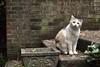 I love this cat... (rootcrop54) Tags: graciejo neighbor neighbors dilute calico female steps aged planter leaves neko macska kedi 猫 kočka kissa γάτα köttur kucing gatto 고양이 kaķis katė katt katze katzen kot кошка mačka gatos maček kitteh chat ネコ