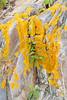 Lichen on Harbor Island (Laura Erickson) Tags: joyofbirding2018 events harborisland maine places lincolncounty