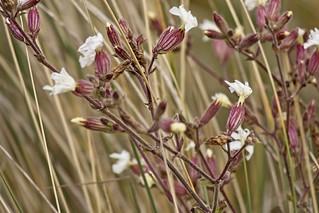 Bloemen op de dijk in Ouddorp