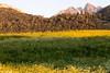 View From The Fields Part II (galvanol) Tags: grass axams evening axamerlizum landscape olivergalvan alpine forest golden fields nature green mountains galvanol flower light