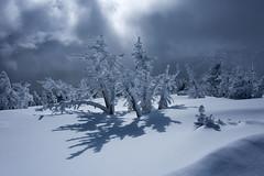 Stick Figures (jordannek) Tags: jordan ek photography oregon storm cold winter mt bachelor mount mountains trees stick figures encrusted