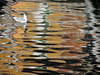 Seagull (markb120) Tags: venice channel canal ditch gutter culvert watercourse water building gull seagull mew seamew bird fowl flyer flier beak bill pecker rostrum neb nib plumage feathering feather coverts coat dress