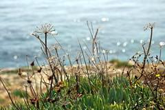 (ifranke) Tags: canon eos apulien italien italy puglia nature natur meer sea ocean blau blue bokeh