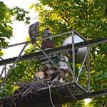 GT Hawk Nest (0773) thumbnail