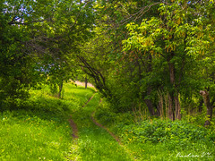 Way in forest (BVR_Photo) Tags: way forest summer