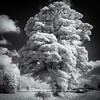 Tree of Life (kckelleher11) Tags: 1445mm 2018 bw ep2 ir june olympus infrared panasonic tree