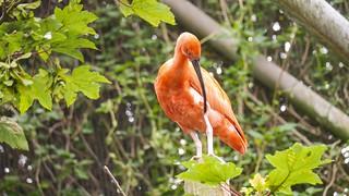 Bird - 5304