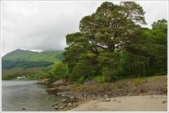 Rowardennan Loch Lomond (Ben.Allison36) Tags: rowardennan loch lomond scotland