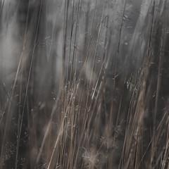 Fragile - Series 2 /01 (KromOner) Tags: kromoner art design minimal dark nature silent solitude silence mood atmosphere quiet sunset canon austria calm vegetation grass gras gräser ldr depthoffield