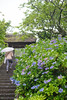 20180610-DS7_7756.jpg (d3_plus) Tags: 雨 歴史 aftertherain building drop 聖地 nikkor50mmf14 shrine 北鎌倉 ancientcity holyplace sanctuary history rainy 寺院 rain afnikkor50mmf14 鎌倉 50mm 50mmf14 nikon historicmonuments kanagawa nikkor kanagawapref shintoshrine architectural waterdrop 雨上がり temple 神奈川 kamakura 50mmf14d 神奈川県 神社 歴史的建造物 寺 水滴 nikond700 kitakamakura buddhisttemple architecturalstructure 建築物 古都 nikonaiafnikkor50mmf14 aiafnikkor50mmf14