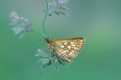 Butterfly (ErrorByPixel) Tags: plant k5 macro insect butterfly nature green closeup pentax