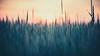 Field (jarnasen) Tags: d810 nikon sigma105mmf28 tripod field nature nordiclandscape sweden sverige copyright geo geotag järnåsen jarnasen östergötland outdoor crop lowlight sunrise dawn
